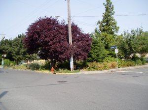 Haultain Common, Asquith at Haultain,  garden Victoria BC Pacific Northwest