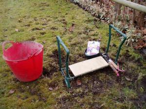 planting crocus in lawn
