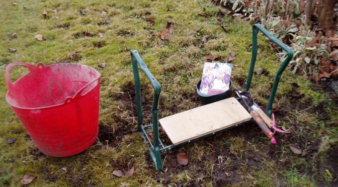 planting crocus in lawn garden Victoria BC Pacific Northwest