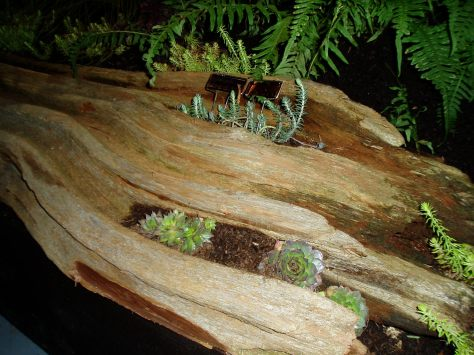 NWFGS - driftwood crevices