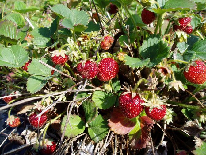 June's Berries