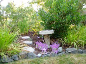 WS - September colchicum garden Victoria, Vancouver Island, BC, Pacific Northwest