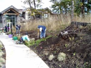 the crew gets busy weeding & digging transplant holes