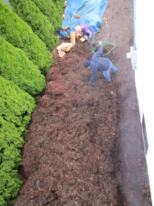 leaf mulch - from above