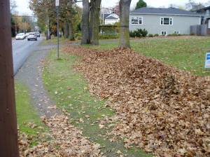 leaf pile along Richmond Rd