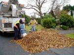 Parks Department vacuuming leaves, garden Victoria BC, Pacific Northwest