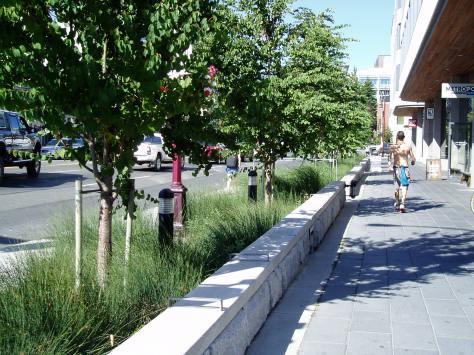 the Atrium rain garden - separating pedestrians from vehicle traffic