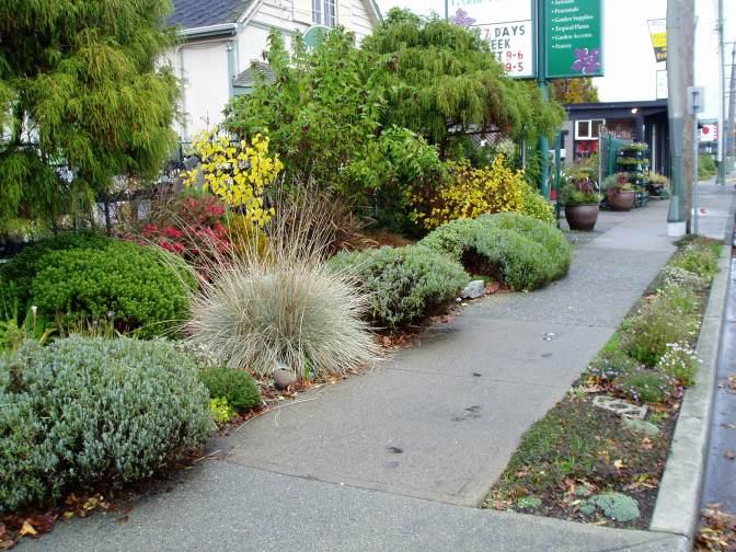 Oak Bay Gardenworks boulevard in fall garden Victoria, Vancouver Island, BC, Pacific Northwest