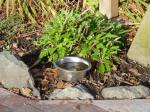 Clare Street pet water bowl