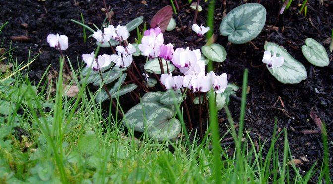 February Garden Activities