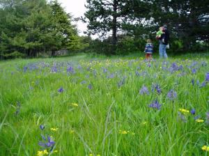 Camas Meadow - Beacon Hill Park 1