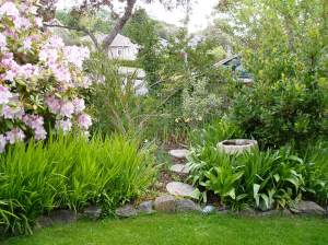 bottlebrush to the right of the pink rhodo