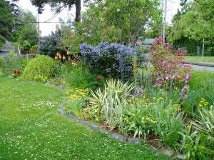 full sun garden in early June