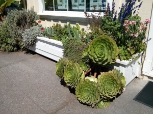 Planter box in Mendocino California