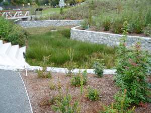 Fisherman's Wharf rain garden fall 2013 MS1