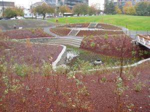 Fisherman's Wharf rain garden fall 2012 WS1