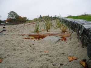 Fisherman's Wharf rain garden fall 2012 beach