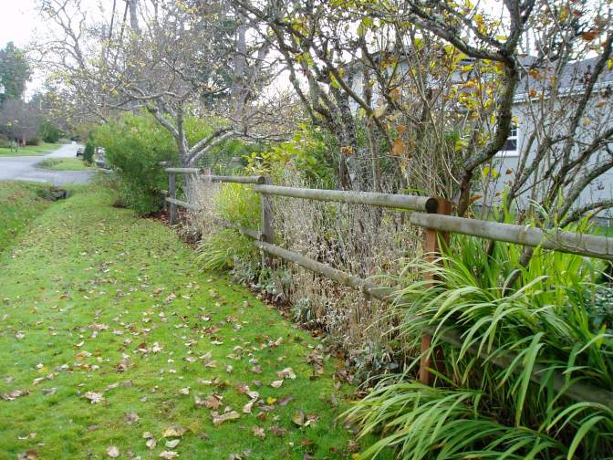 ernest fenceline in november