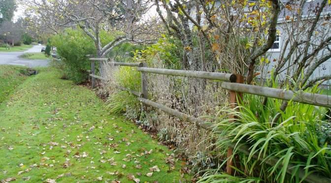 ernest fenceline in november