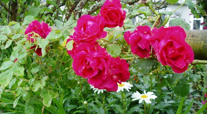 June Garden Activities