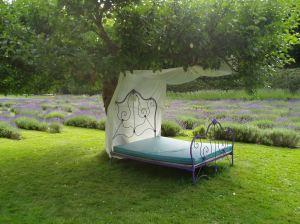 Happy Valley Lavender Farm field in July