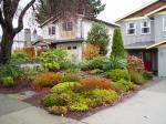 lawn free front yard in James Bay Victoria BC garden