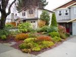 lawn free front yard in James Bay Victoria BC garden