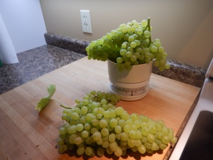 green grapes September 2015 weight garden Victoria BC Pacific Northwest