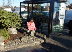 faux stone rock mulch at Denny's bus stop, garden Victoria BC Pacific North West