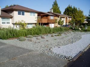 stone mulch in Gordonhead, garden Victoria BC Pacific Northwest