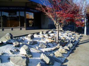 stone mulch near University Heights, garden Victoria BC Pacific North West