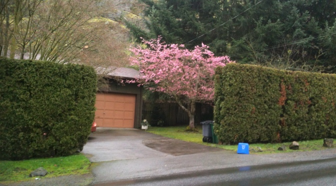 Happiness Is a Pink Tree
