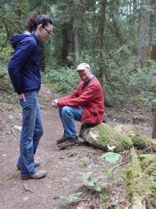 western trillium patch, Trillium Ovatum, garden Victoria, Vancouver Island, BC, Pacific Northwest