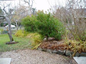 crocosmia montbretia garden Victoria, Vancouver Island, BC, Pacific Northwest