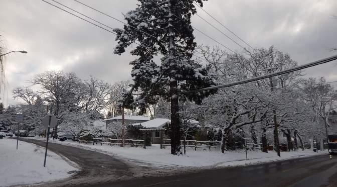 snowy scene garden Victoria BC Pacific Northwest