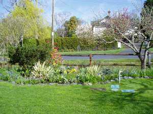Hyacinthoides hispanica – spanish blue bells garden Victoria, Vancouver Island, BC, Pacific Northwest