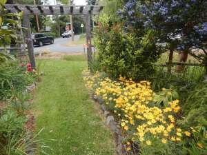Eriophyllum lanatum, Woolly Eriophyllum, Wooly Sunflower, Oregon Sunshine,woody eriophyllum, wooly daisy, sunshine flower, garden Victoria, Vancouver Island, BC, Pacific Northwest