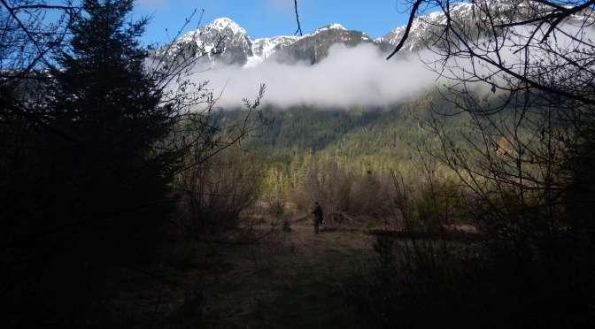 Strathcona Park, BC, Ralph River Campground, garden Vancouver Island Island Victoria BC Pacific Northwest