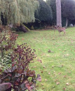 ws Deer Antlers vs fencing 2
