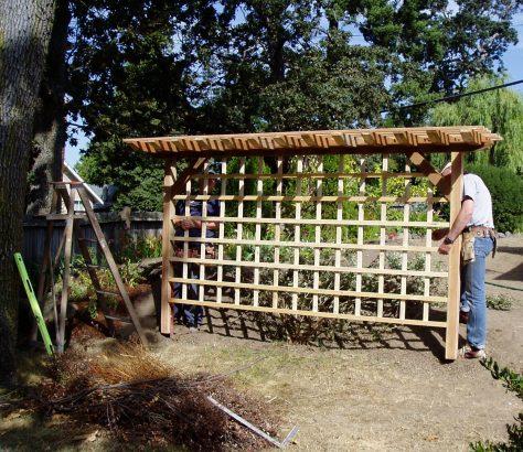build a privacy trellis, garden Victoria BC Pacific Northwest