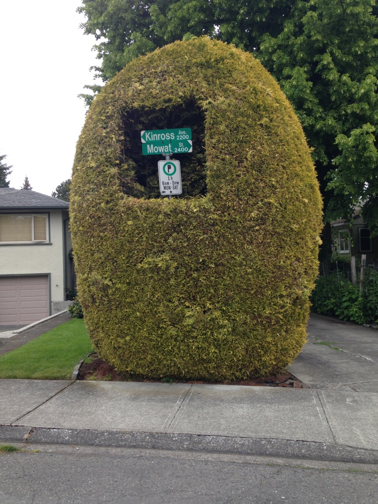 Hedge consumes sign, garden Victoria, Vancouver Island, BC, Pacific Northwest